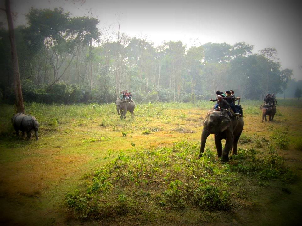 Elephants in Chitwan, Nepal