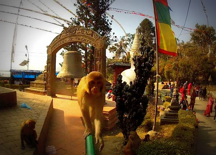 Near the Swayambhu Stupa in Kathmandu this monkey wanted our camera, Nepal