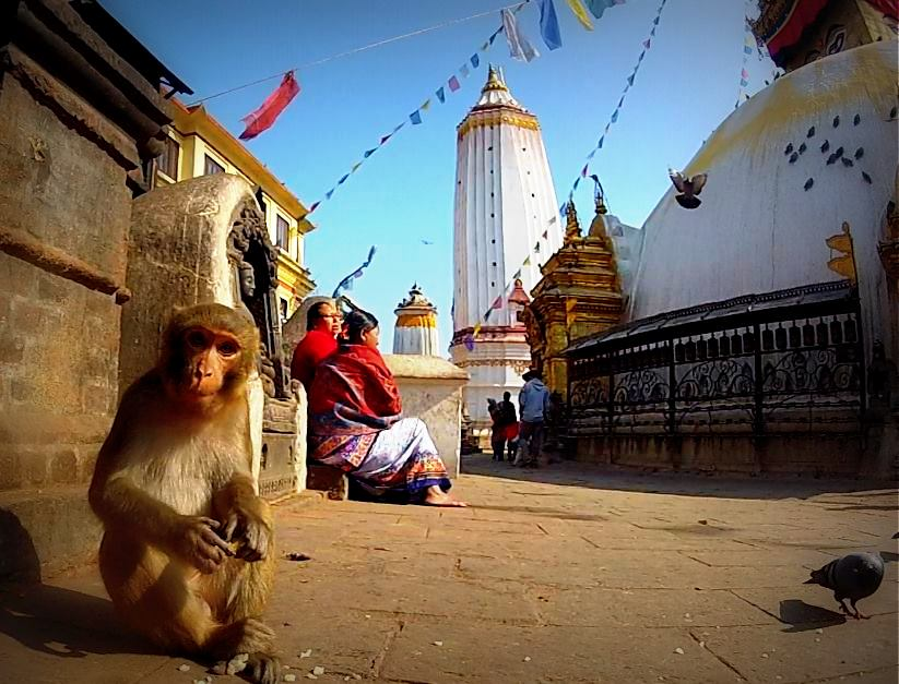 Monkey hanging out at the Swayambhu Stupa in Kathmandu, Nepal