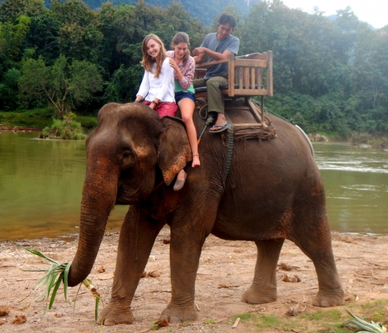 Elephants near Luang Prabang, Laos