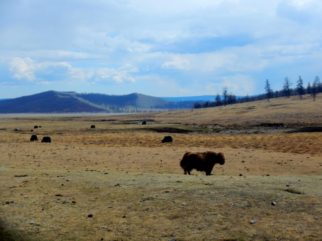 The northern Mongolian countryside