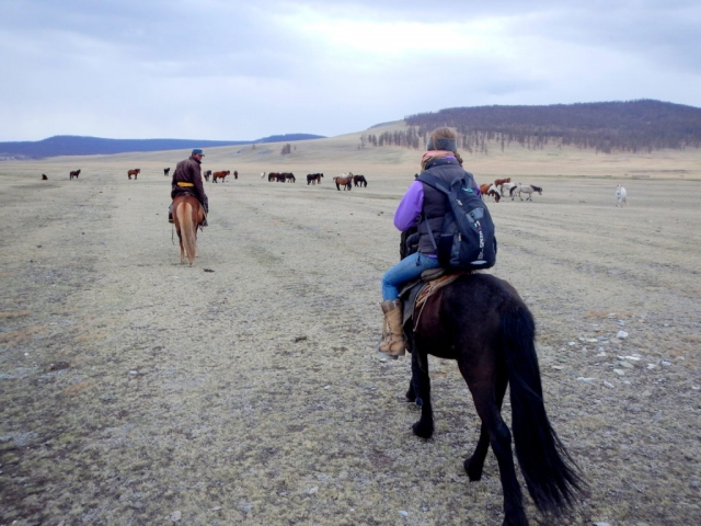 Horse-trekking through northern Mongolia, wild horses are a common sight