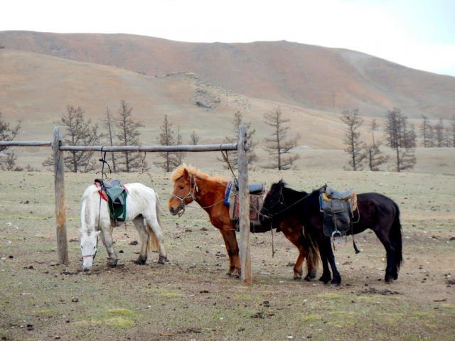 Our hearty Mongolian horses, who put up with us for days. Northern Mongolia.