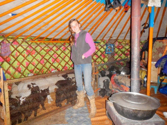 Inside the ger. This is their family home. They bring the baby goats inside when it gets too cold. Northern Mongolia.