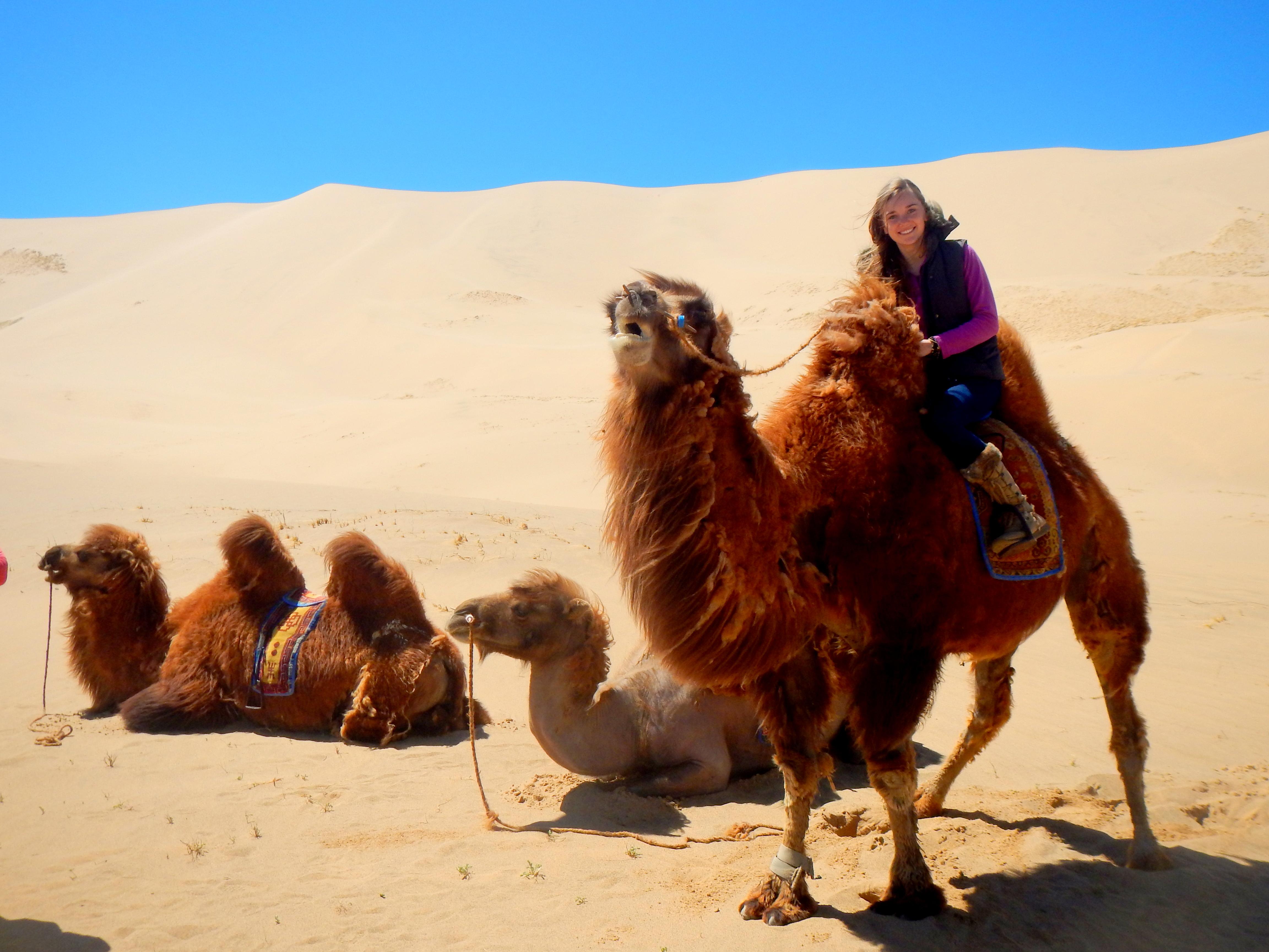 Camel trekking in Khongoriin Els, Gobi, Mongolia