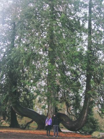 Blarney Gardens Ireland