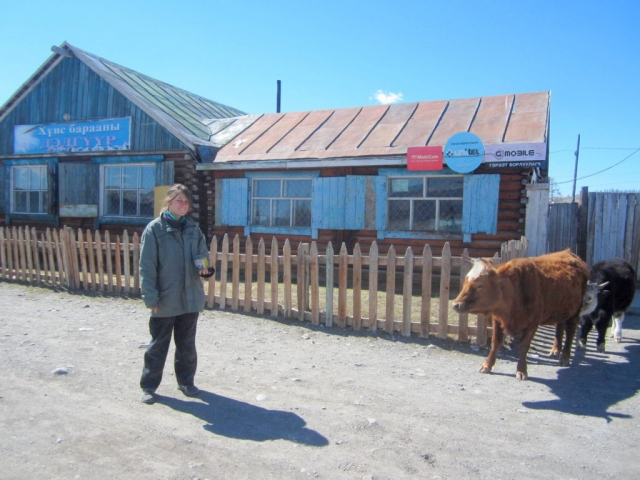 Animals wander freely through Khatgal, Mongolia
