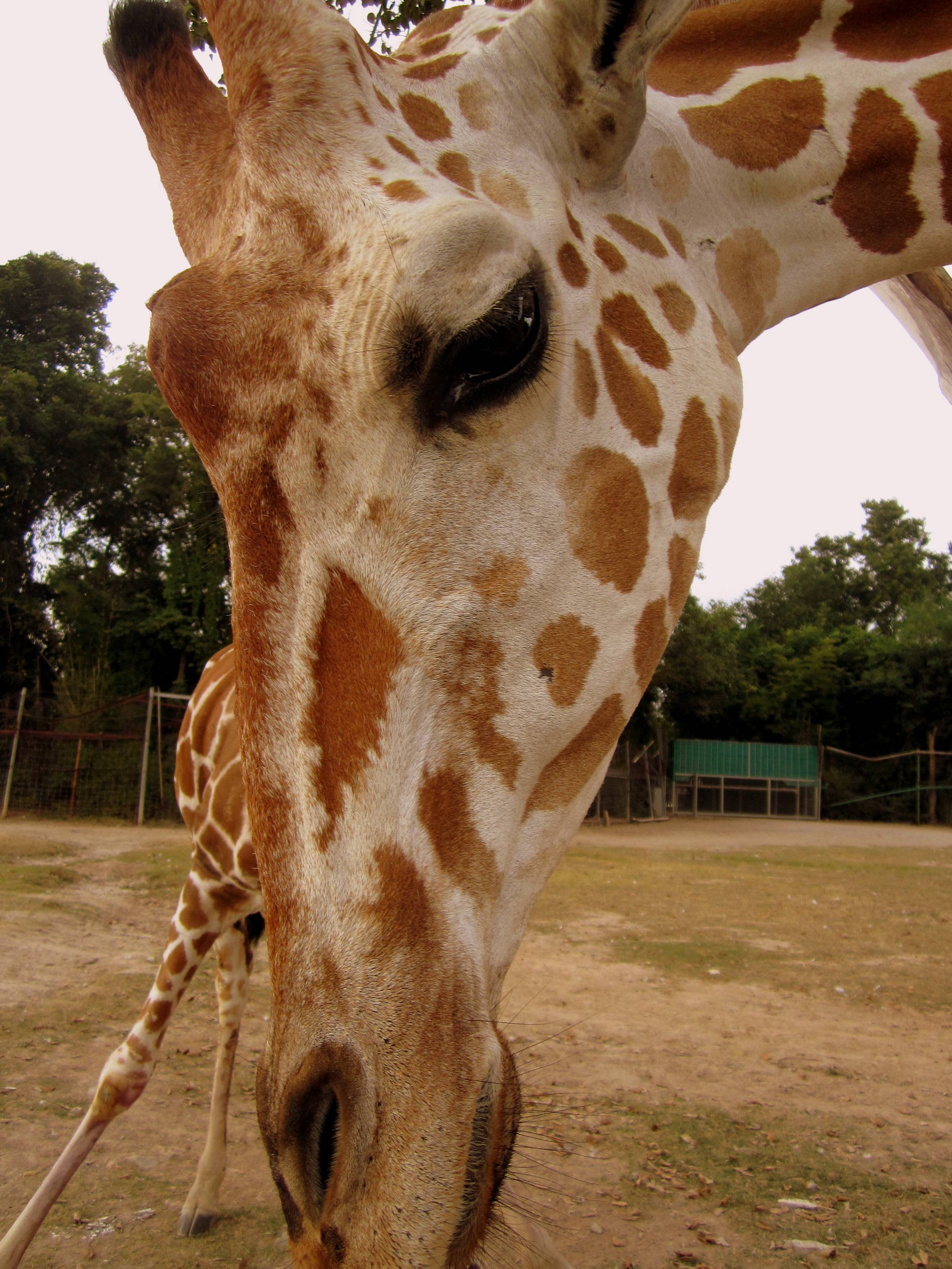 At the Safari Park Zoo Volunteer Project. Kanchanaburi, Thailand