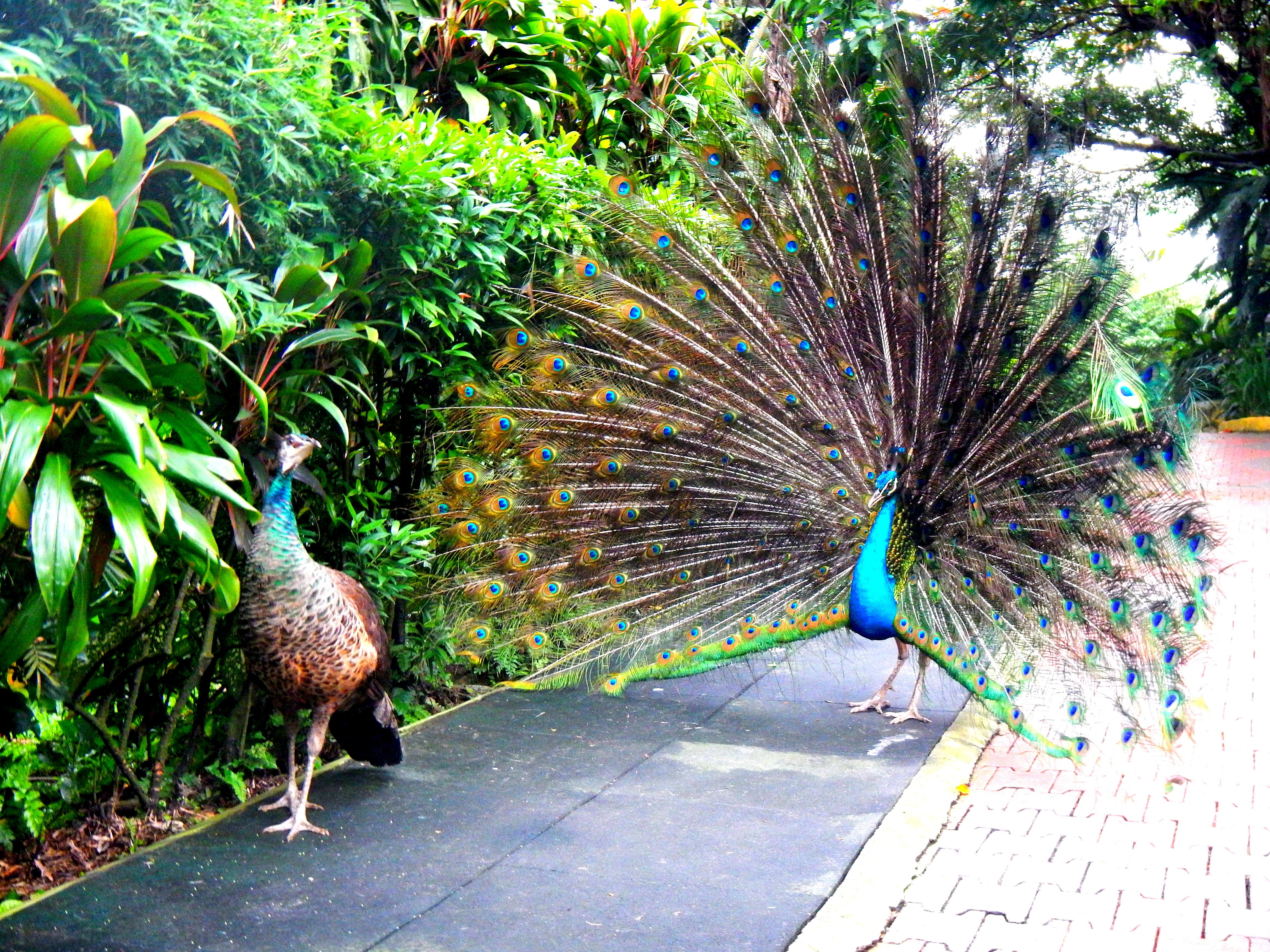 Bird Park. Kuala Lumpur, Malaysia