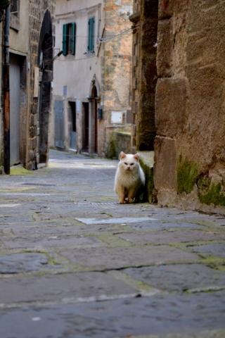 Arcidosso. Tuscany, Italy
