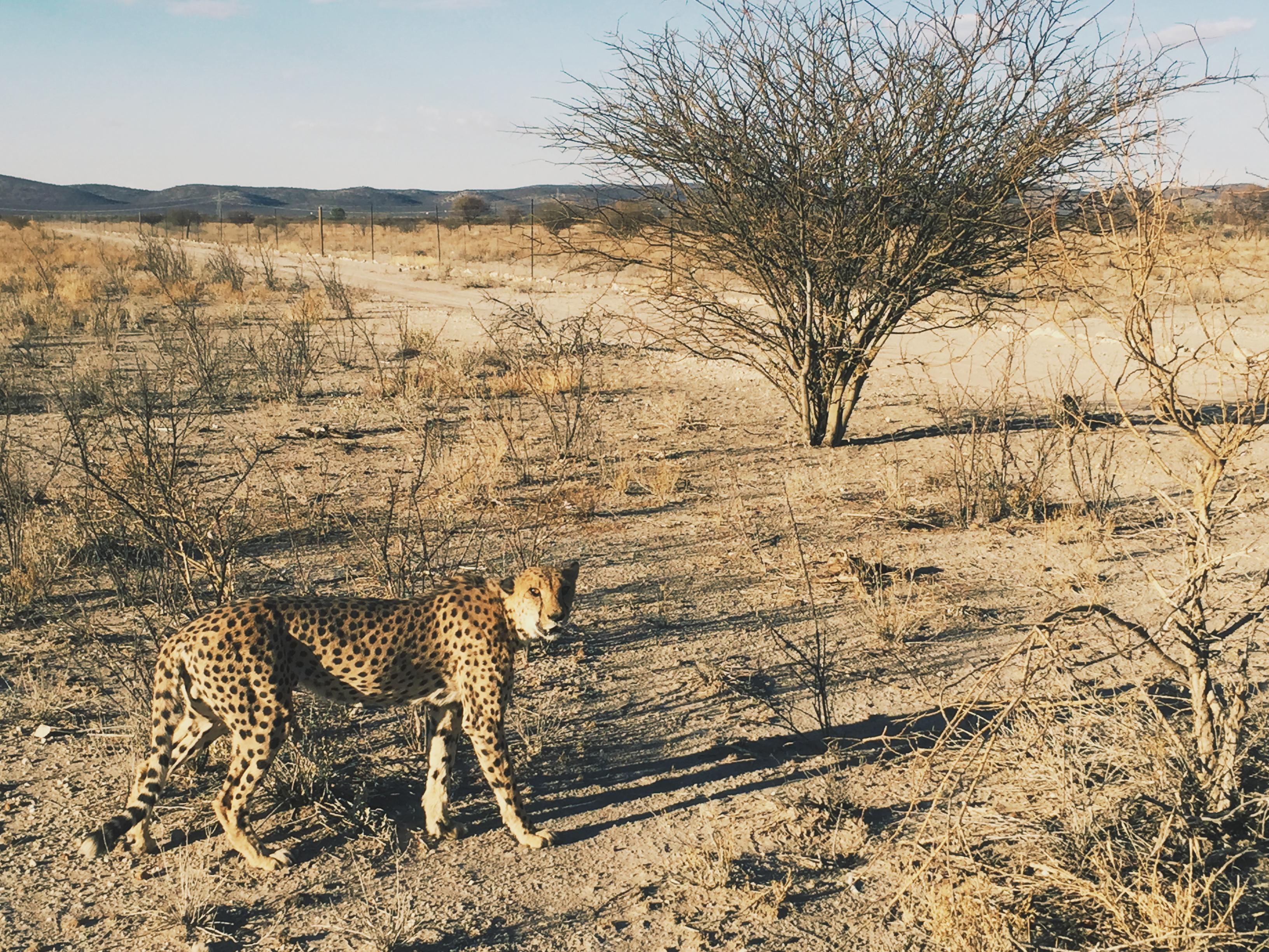Otjiwarongo, Namibia